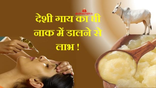 nasal drops of cow pure ghee