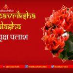 Brahmavriksha Palasha